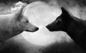 black-and-white-wallpaper-with-two-wolves-and-a-full-moon-hd-animal-background
