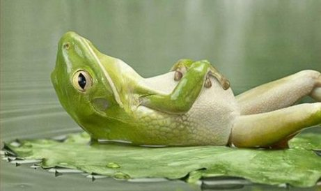 relaxed frog